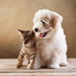 Creating an Emergency Plan Can Save Your Pet's Life