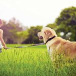 Understanding the Benefits of Pet Insurance
