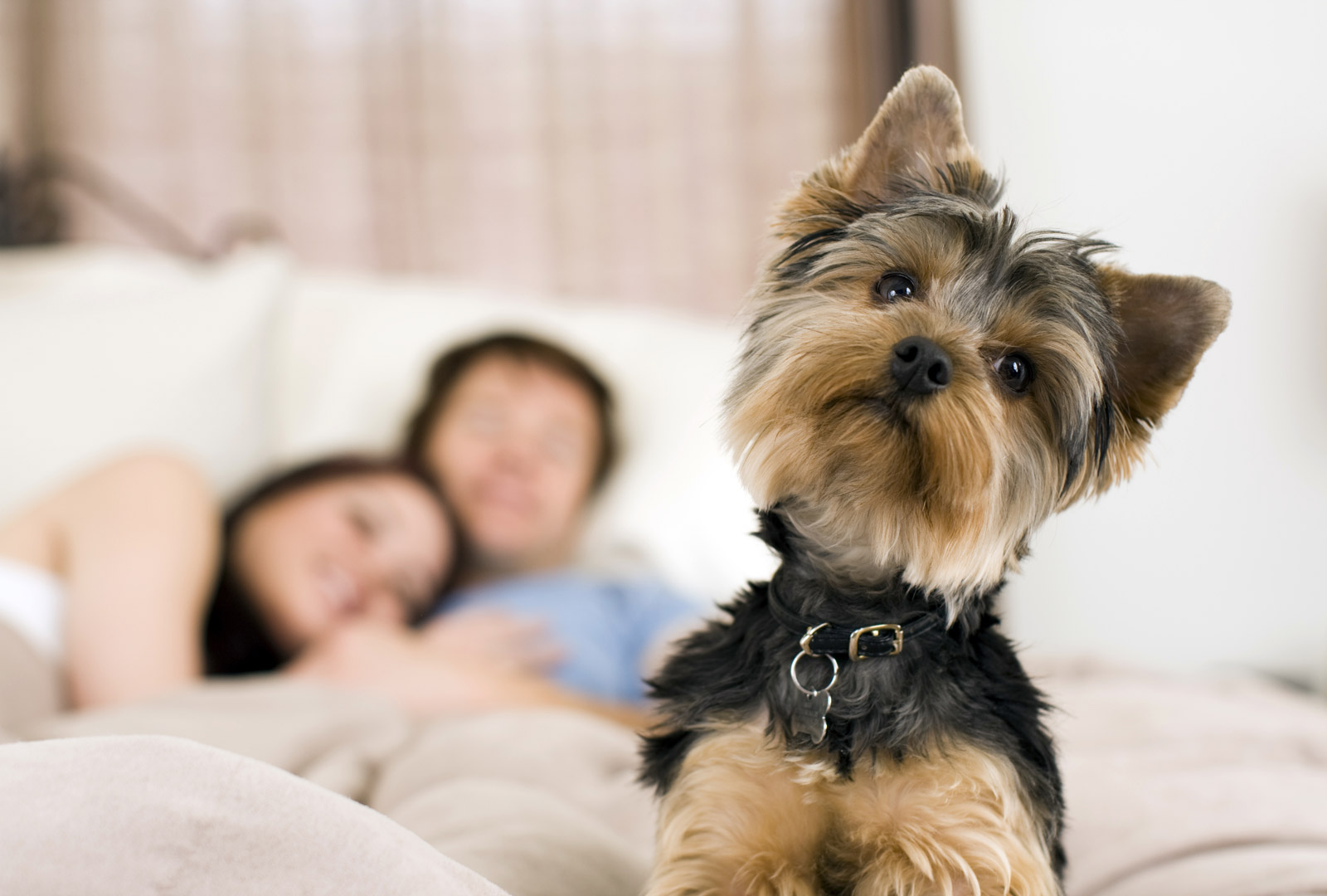 Vital Information About Pet Insurance